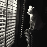 Kitty Staring Out Window