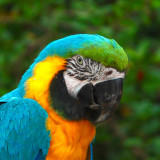 Parrot in the DR