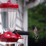 Hummingbird finds the feeder.