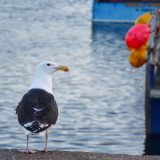 Seagull in a harbour