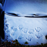 Handprints in the snow on a car hood.