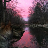 Watching an amazing sunrise with my furry BFF