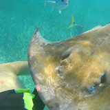 This is the moment a wild stingray sat on me in belize haha