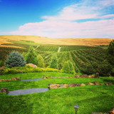 Cameo Heights Mansion Orchards