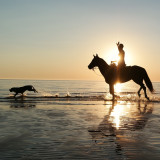 Dog with horse