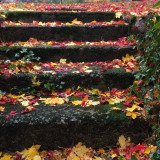 Leaves fallen in stone steps
