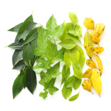 Bright and beautiful green leaves arranged by color on a white background.