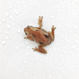 Frog surprised me in the shower