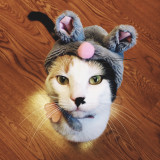 Cat in mouse costume.