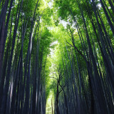 Strolling through the bamboo forest in Arashiyama Kyoto.