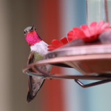 Hummingbird resting on feeder in Colorado