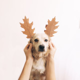 Cute dog reindeer with autumn leaves