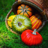 I will give thanks to you, LORD, with all my heart; I will tell of all your wonderful deeds. (PSALM 9:1)Have a Happy Thanksgiving! Hoping your Thanksgiving is filled with blessings and joy!~Dave & Bene