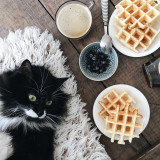 Weekend breakfast with cat
