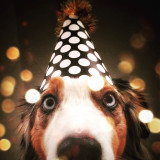 It's a dog kinda New Year! Let's celebrate!