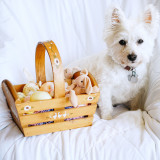 Cute white dog sitting next to an Easter basket