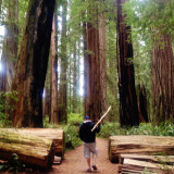 A morning hike in the Redwoods.