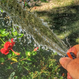 Watering with a hose in summer