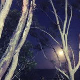 Full moon between tree branches