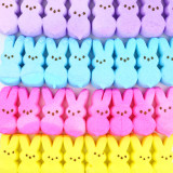 Colorful rows of Peeps - perfect for springtime and Easter.