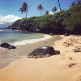 Sunbathing sea turtle