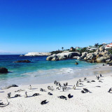 Table mountain national park capetown South Africa