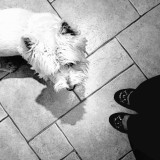 Top View - wherever I go, my little pooch follows! 🔆➿➿➿➿➿➿➿➿➿➿➿➿➿🔅 THIS PHOTO IS NOMINATED  🔅➿➿➿➿➿➿➿➿➿➿➿➿➿