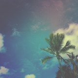 Wild and free in the tropics. Mercurial sky. Wind in the palms. Clouds like cotton candy.