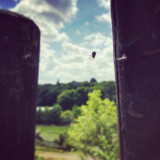 Small spider making a web