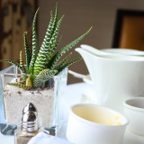 Succulents and White China