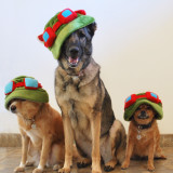 Three dogs in hats