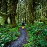 Getting lost in the rainforest