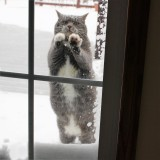 Please, can I come in?  Please?