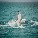 Whale Watching in Queensland, Australia