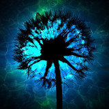 Dandelion silhouetted against blue background