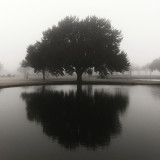 Trees reflected on a lake