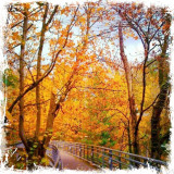 Bridge Over Reed College Canyon in the Fall, copyright ©2013-2014 @annaporterartist. View/buy my entire collection of Portland and autumn prints available for purchase in my Instaprints Gallery at http://annaporter.instaprints.com . View/buy my original paintings for sale on my website at http://annaporterartist.com and in my Fine Art America Gallery at http://annaporter.fineartamerica.com. Follow me on Instagram at http://instagram.com/annaporterartist to keep up with my latest digital photography.
