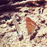 Discussion between 2 butterflies. I tried not to disturb. #iphoneonly #iphone #onlyiphone #chat #butterfly #friendship #funny #cute #lovely #insect #butterflies #instahub #instagood #instamood #igdaily #instamoment #amazing #awesome #bestphotos #bestshots #great