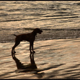 Dog and sea reflection on the sand on a summer morning at the beach in New Zealand.