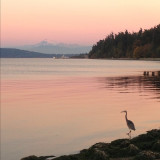 An evening look at MT. Baker from the ferry dock in Anacortes, Washington.