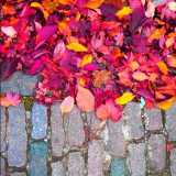 Colorful leaves on the pavement at autumn