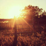 Sunset at the pasture