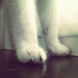 these were the lovely paws of my old evil cat named Patty