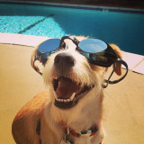 @allentheterrier chillin poolside