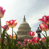 Spring in Washington, D.C.