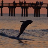 This dolphin was perfectly happy riding and playing in the waves all alone. So beautiful!