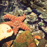 Starfish found on a hike in Palos Verdes.