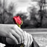 Selective coloring on a rose