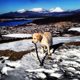 Easter trip on the mountain with my dog