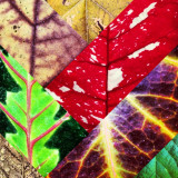 Colorful collage of leaves